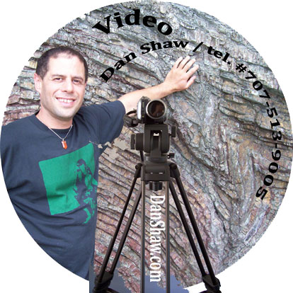 Dan Shaw video and film